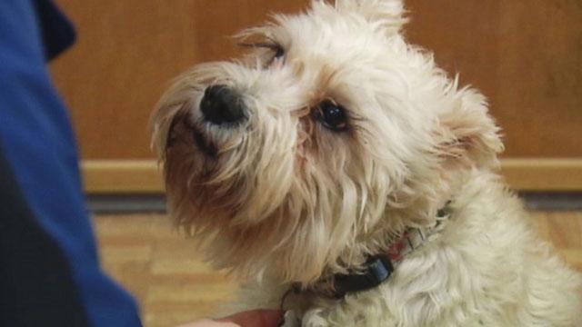 Dog finds owner_25248