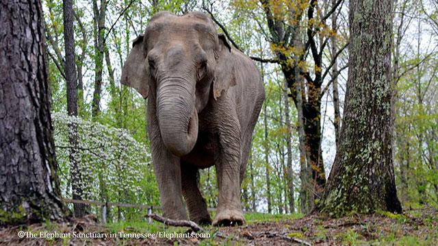 Freida Elephant_32201