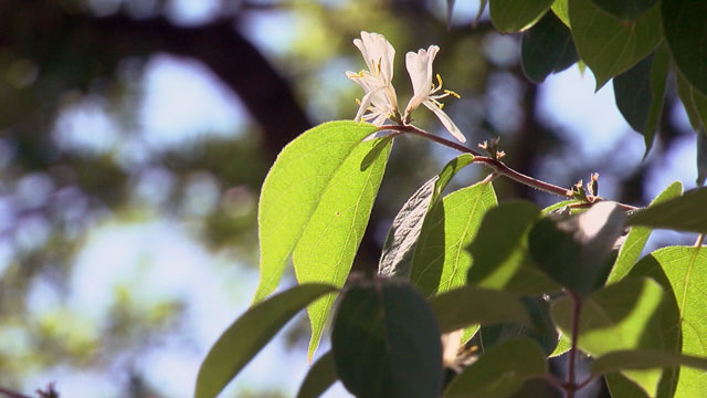 Allergy, Allergies, Trees, Plants Generic_48638