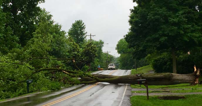 Tree falls Blackman Road and Darlington Drive in Crieve Hall_53904