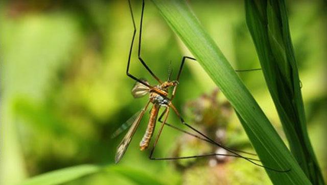 Mosquito Generic_37729