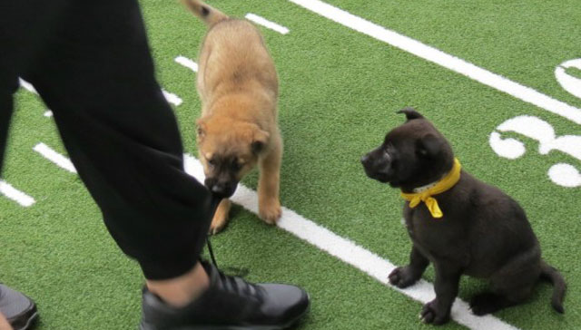 Super Bowl XLIX Puppy Bowl_21504