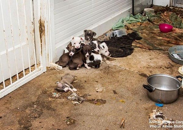 Huntingdon animal rescue_272371