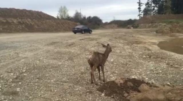 baby-deer_271878