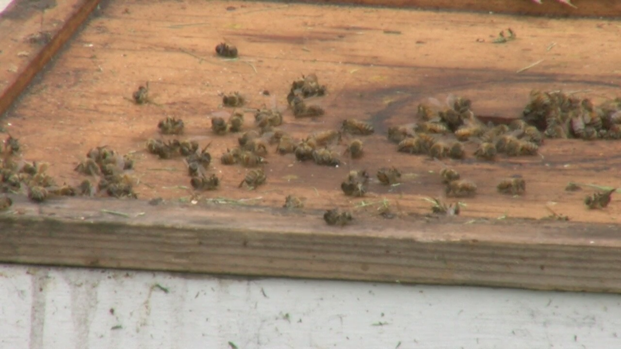 bees_284465