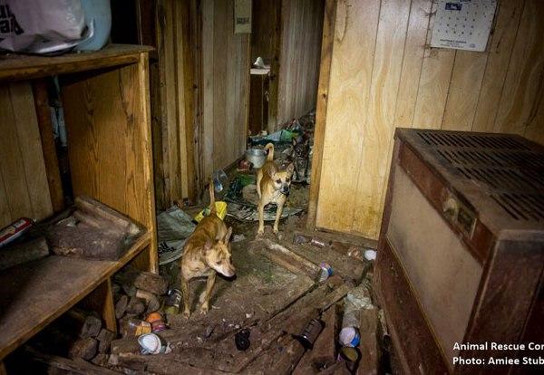 Morgan County animal rescue_288918