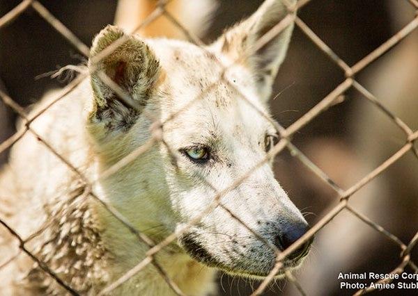 Macon County animal rescue_290169