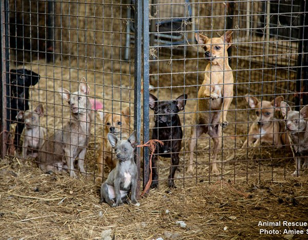 Hardin County animal rescue_311251