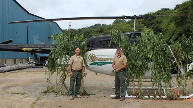 marijuana plants_310484