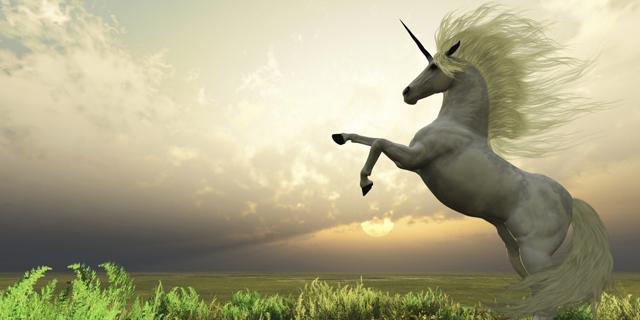Unicorn_326938