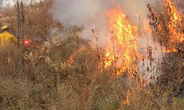Anderson County wildfire_333060