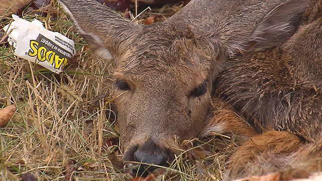 Deer dumping_338429