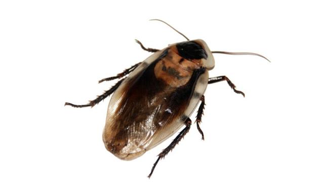 Roach generic_357418