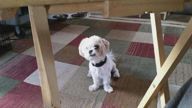 Albuquerque dog_368267