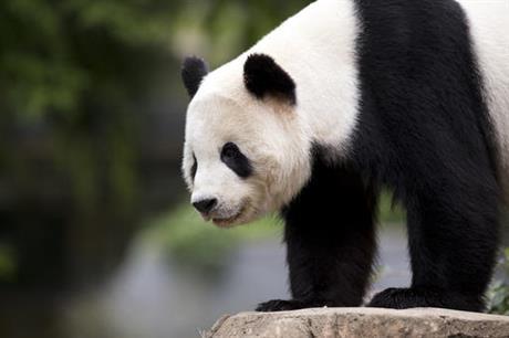panda cub Bao Bao_375070
