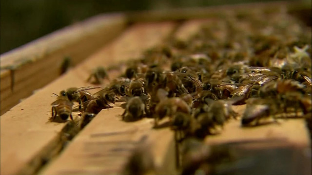 bees generic_381488