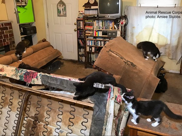 Cat rescue in Tullahoma, Operation Nine Lives_386987