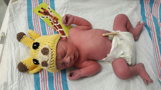 Florida baby gets giraffe hat_401254
