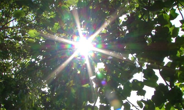 Generic sun_411927