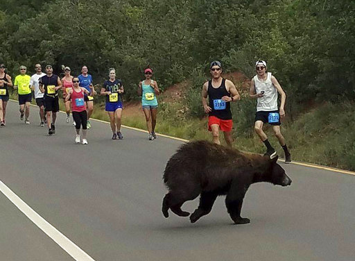 Bear in Race_416485