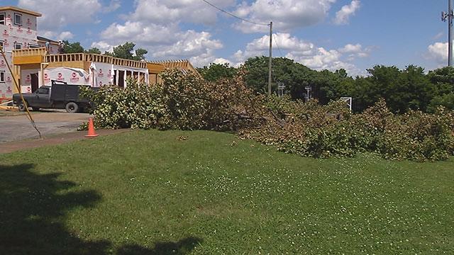 Cleveland Park tree_419287