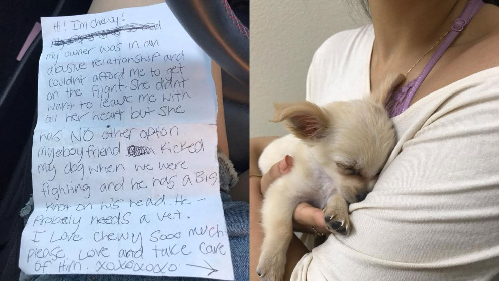 Abandoned puppy found in airport bathroom with note_423270