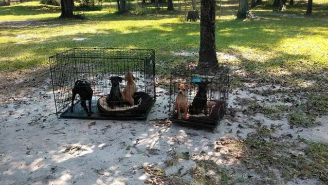 Florida Dogs abadoned_442515