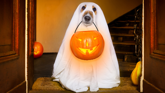 Halloween Ghost Dog Trick Or Treat_455289