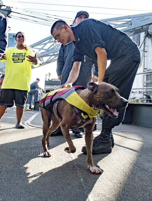 In this Wednesday, Oct. 25, 2017 photo, a sailor greets Zeus the dog with his owner Tasha Fuiaba, left, on the boat deck of the amphibious dock landing ship USS Ashland after she and one other Honolulu woman and their dogs were rescued after being...