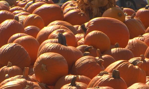Pumpkin patch_327576