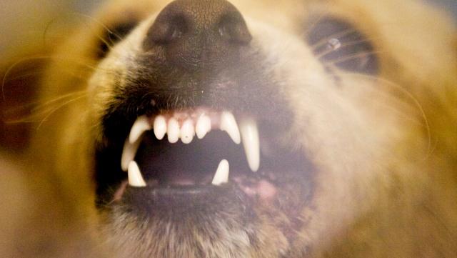 Vicious Dog_457685