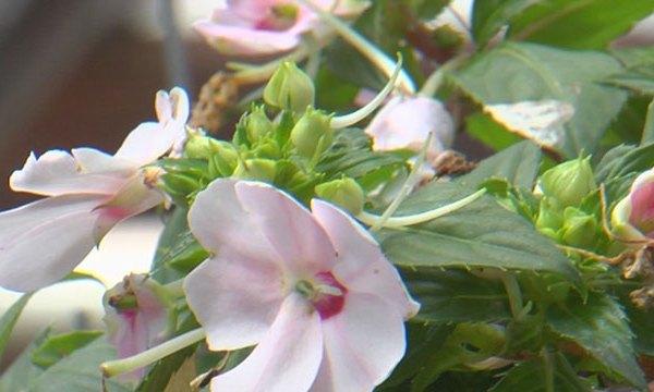 flowers_1524177106974.jpg