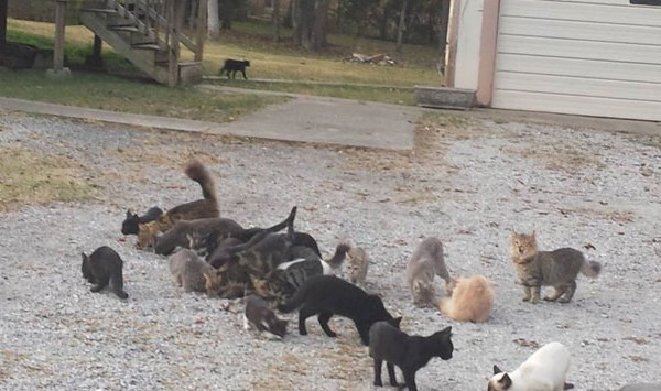Feral Cats_228987