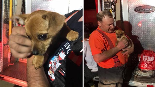 Centerville puppy saved