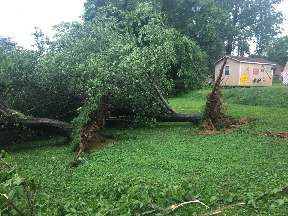 Downed apple trees, Photo by Don Frazier