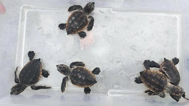 Georgia turtles