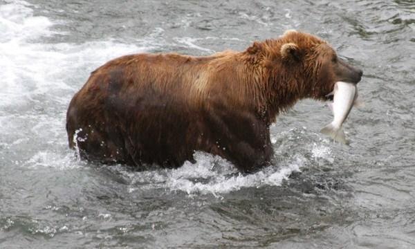 bear generic 2