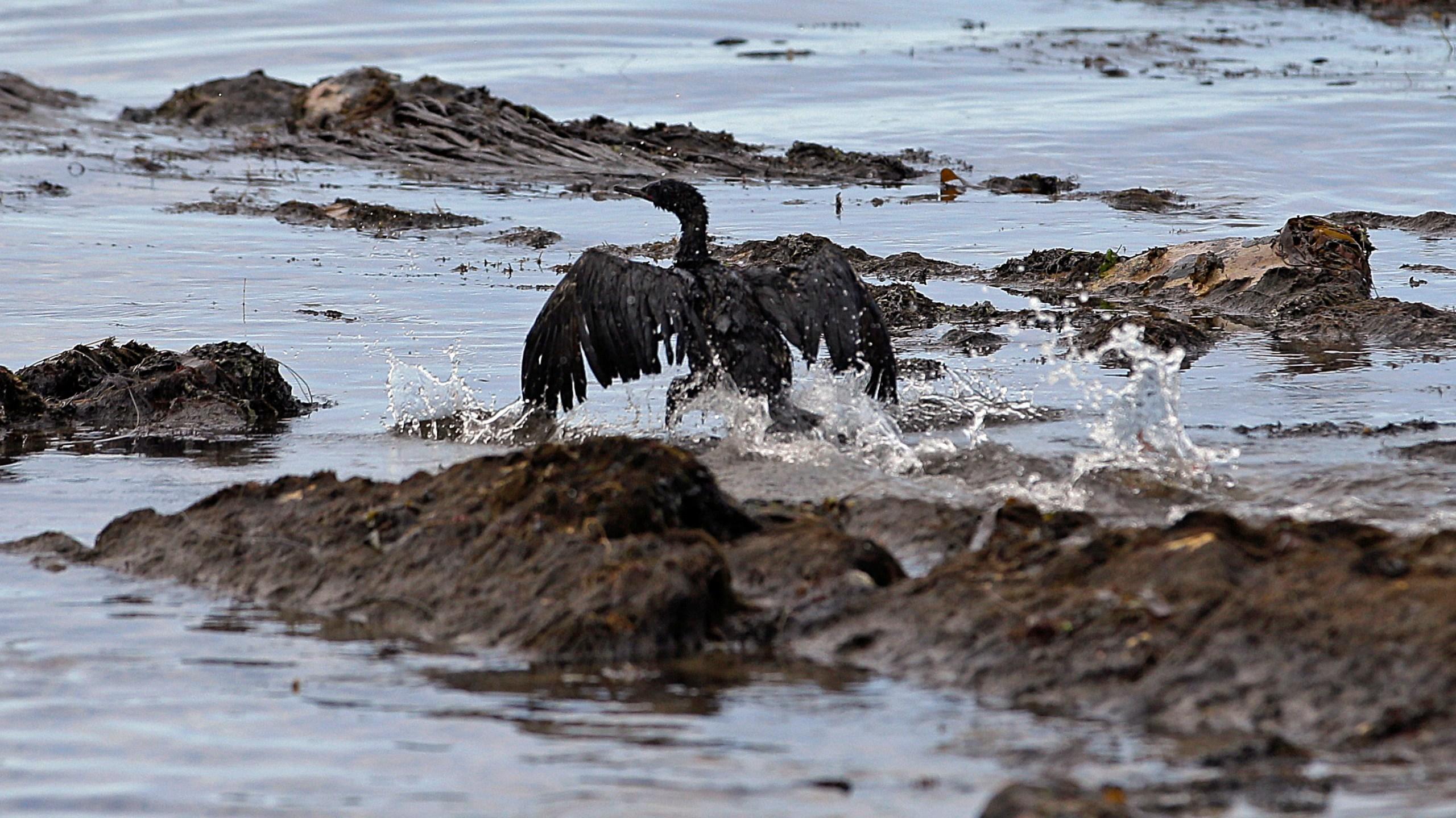 California_Oil_Spill_Verdict_32398-159532.jpg19300355