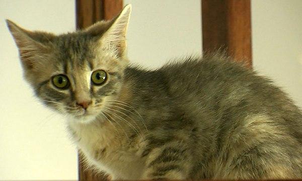 Pet Adoption Cat Generic_215406
