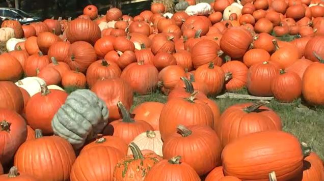 Pumpkins Halloween_1540053898441.JPG.jpg
