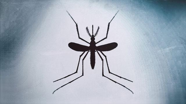 mosquito_427458