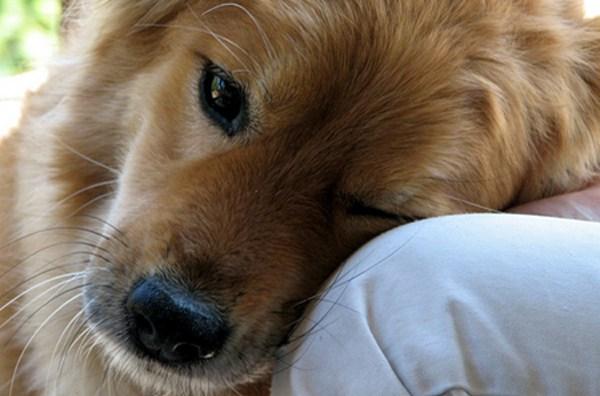 Dog Generic_65804