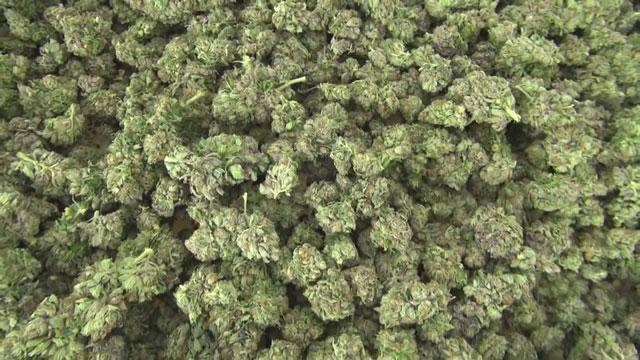 Marijuana, Pot, Weed Generic_36077
