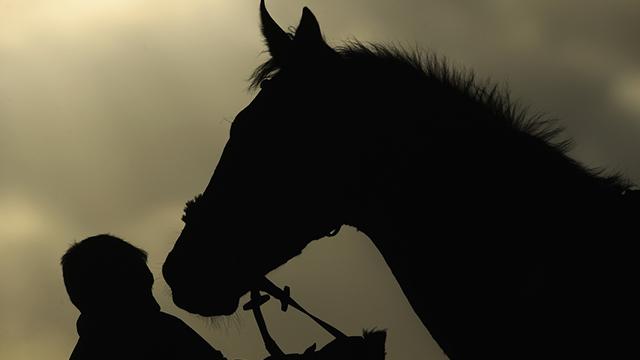 Horse generic 2