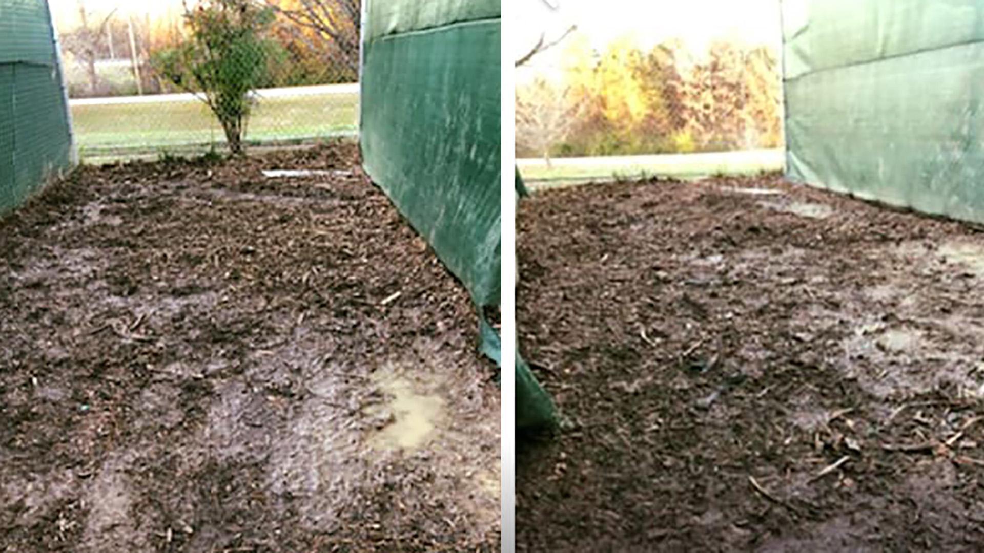 muddy kennels_1547658310039.jpg.jpg