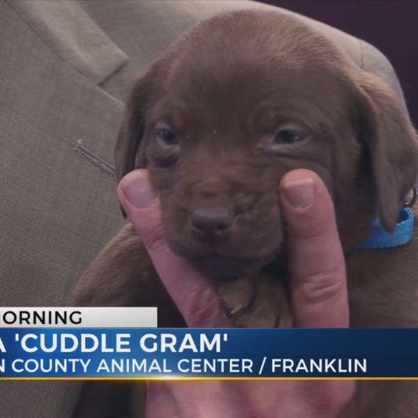 Williamson County shelter offering cuddle-grams