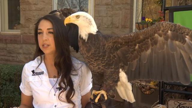 Bald Eagle Challenger
