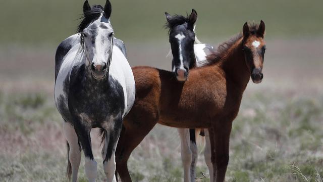wild horses generic