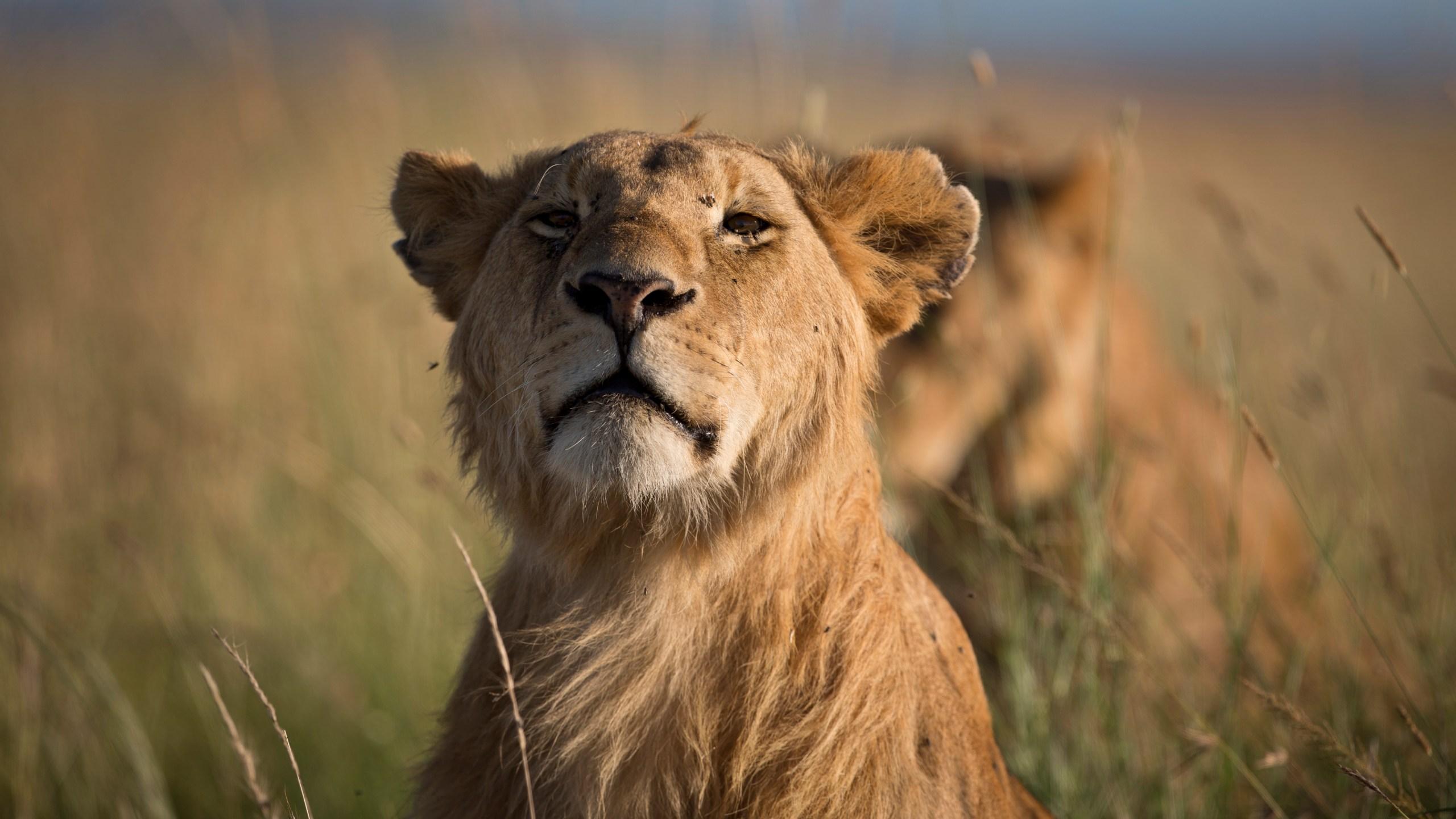 Kenya Lions Poisoned_1554675451769