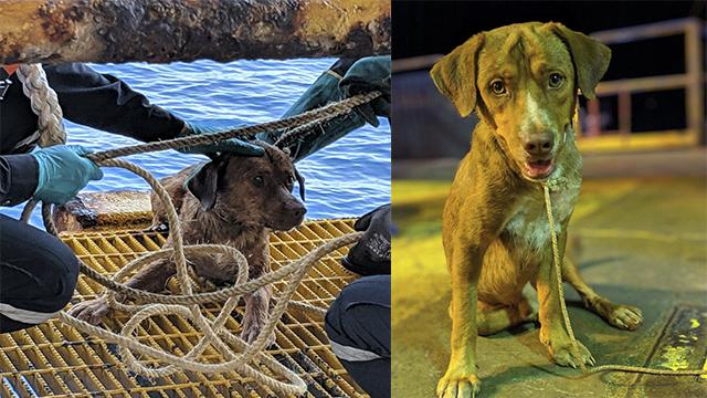 Dog Rescued from ocean_1555481769752.jpg.jpg